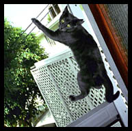 I like to climb the screen door!